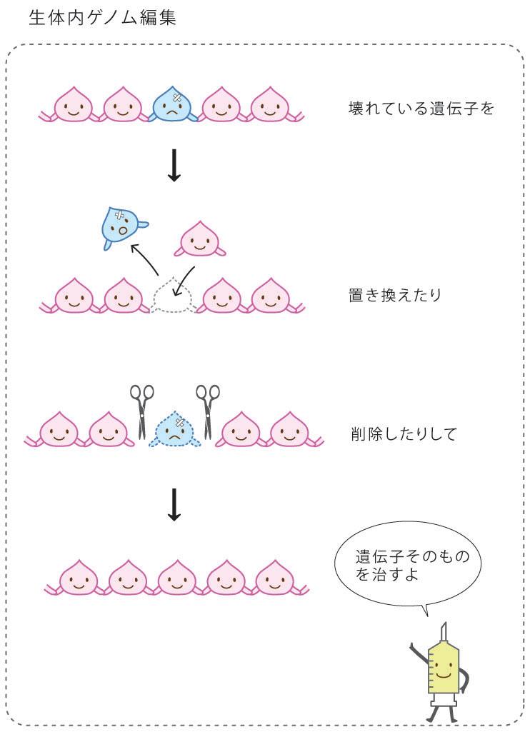 生体内ゲノム編集治療の説明図